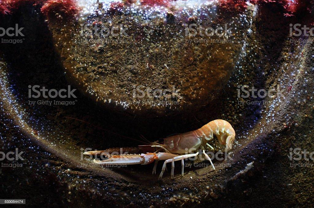 crayfish hiding in some iron part stock photo