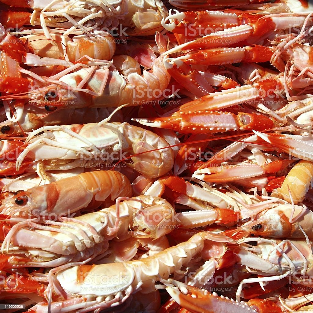 Crayfish Nephrops Norvegicus seafood market royalty-free stock photo