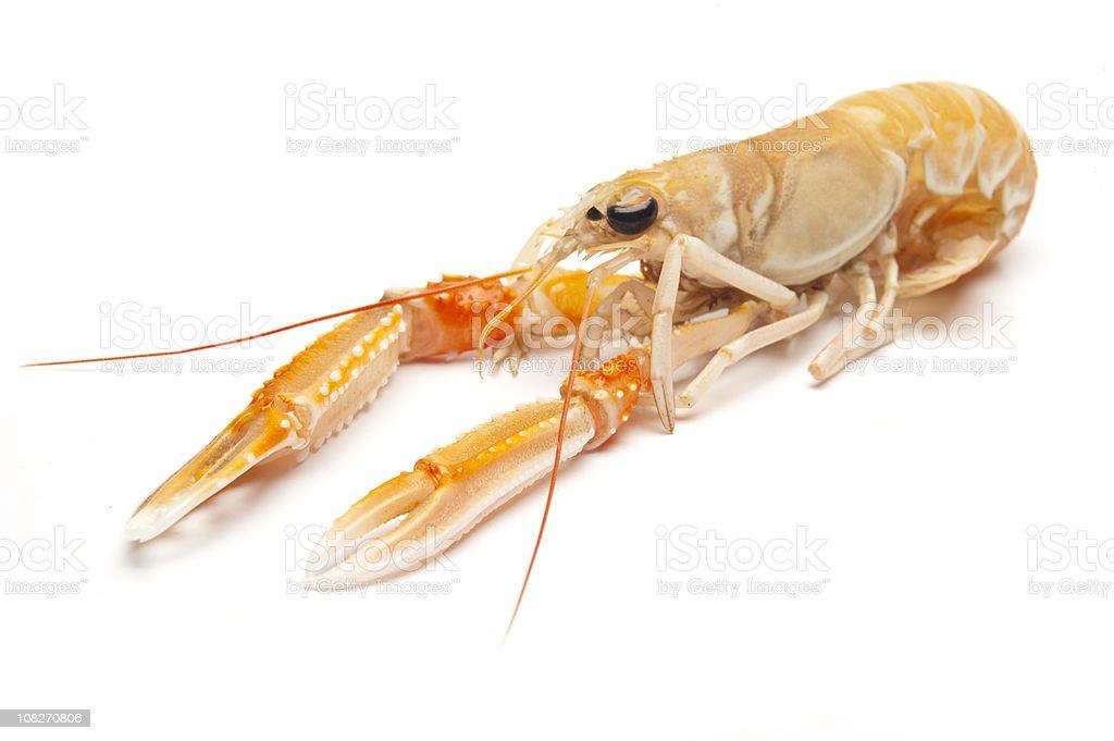 Crayfish on White Background stock photo
