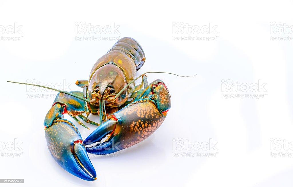 Crayfish stock photo