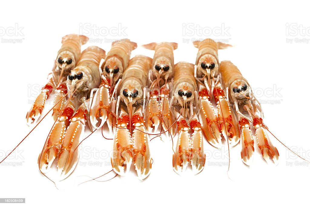 crayfishes in row royalty-free stock photo