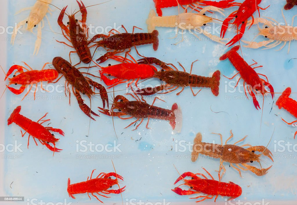 Crayfishs in bolw. stock photo