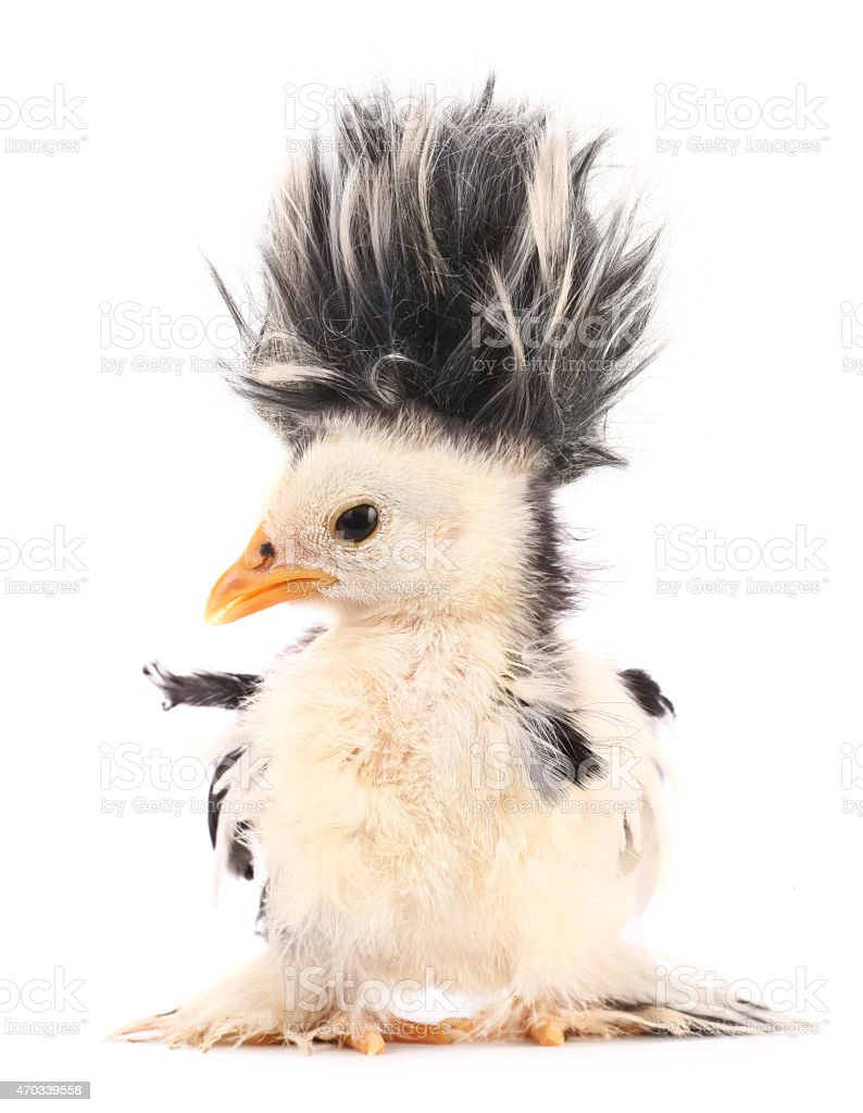 Crazy chick with even crazier hair stock photo