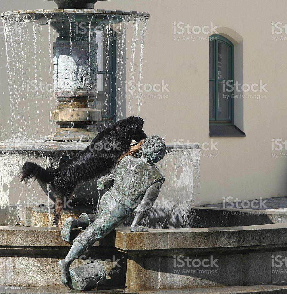 Crazy dog in the fountain stock photo