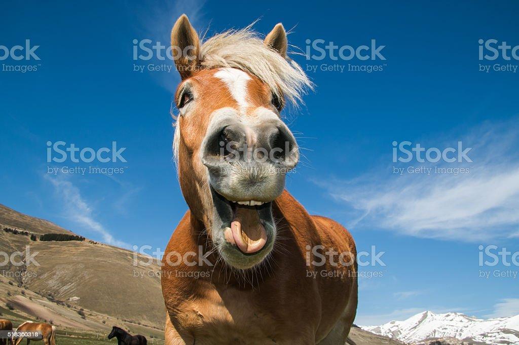 Crazy portrait of smiling horse