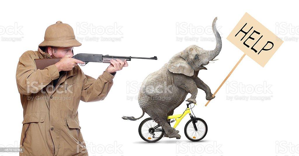 Crazy hunting. stock photo