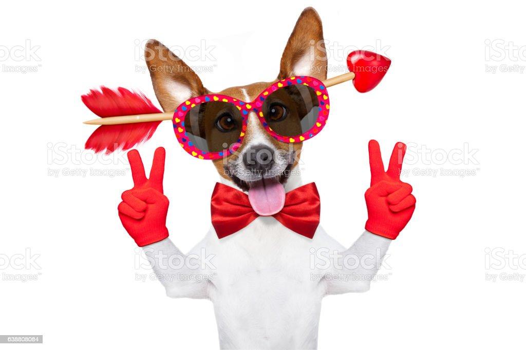 crazy in love valentines dog stock photo