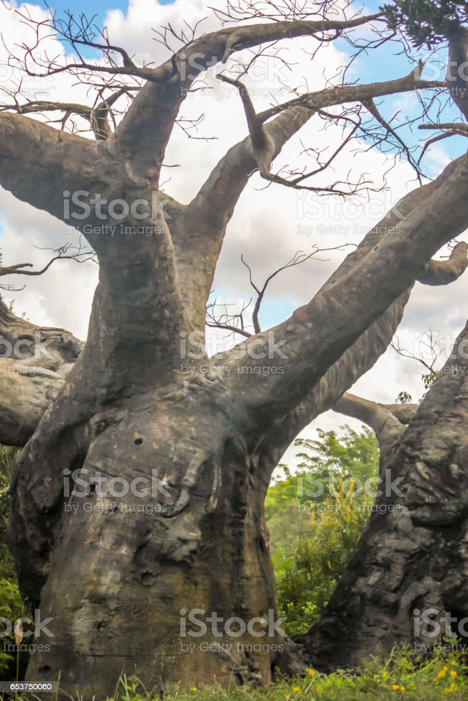 Crazy Leafless Tree Closeup stock photo