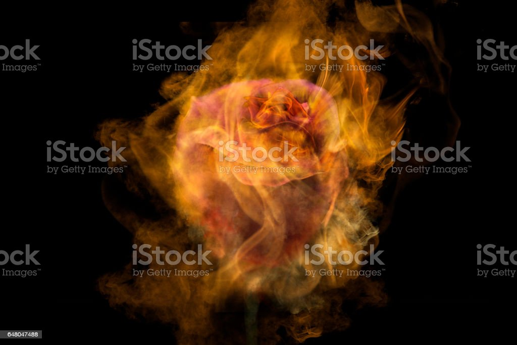 crazy love for you stock photo