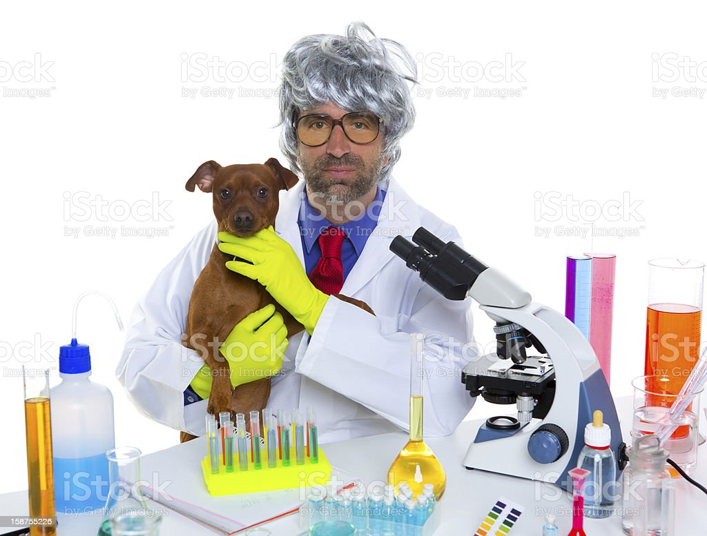 Crazy nerd scientist silly veterinary man with dog at lab royalty-free stock photo