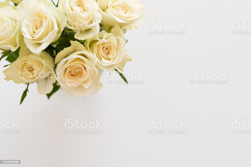 Cream roses from above stock photo