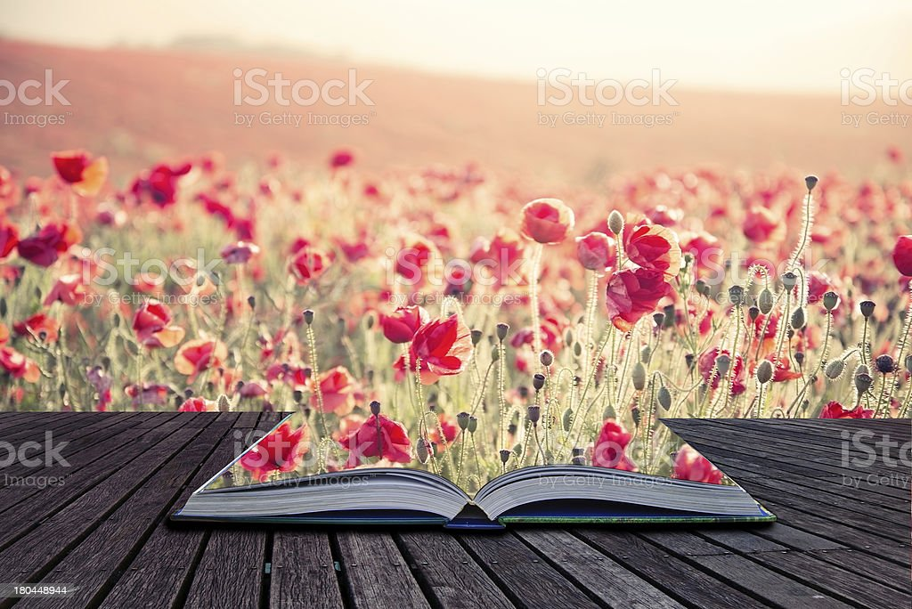 Creative concept book poppy field landscape in Summer royalty-free stock photo