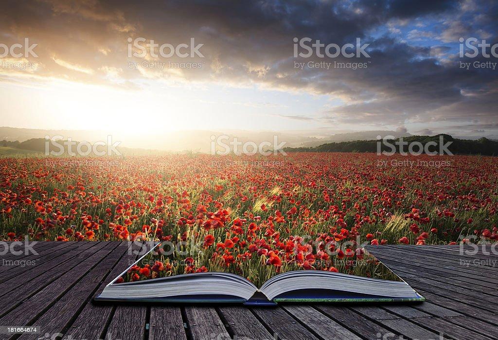 Creative concept book poppy field landscape royalty-free stock photo