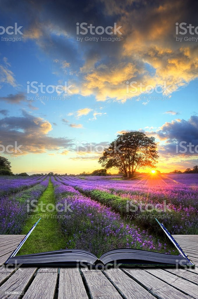 Creative concept image of lavender fields in book stock photo
