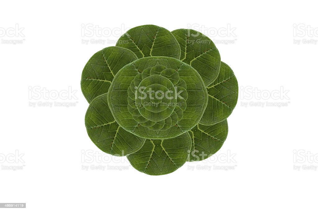 Creative  frame leaf. royalty-free stock photo