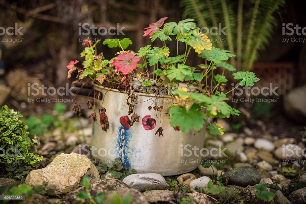 creative garden decoration stock photo
