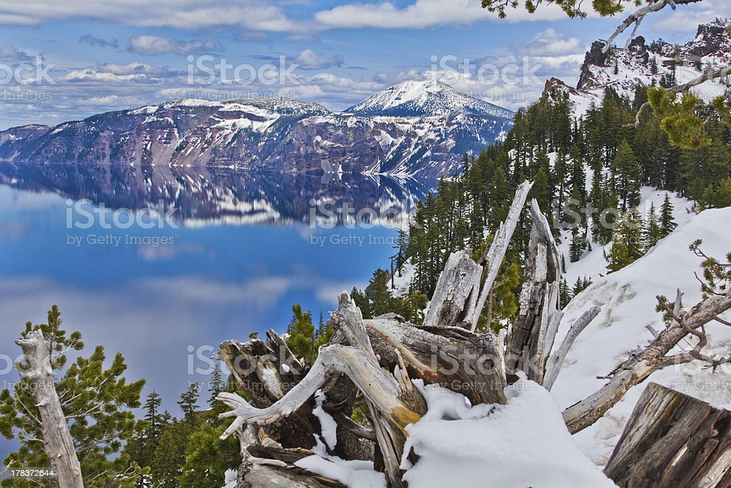 Creative tree in front of Crater lake stock photo
