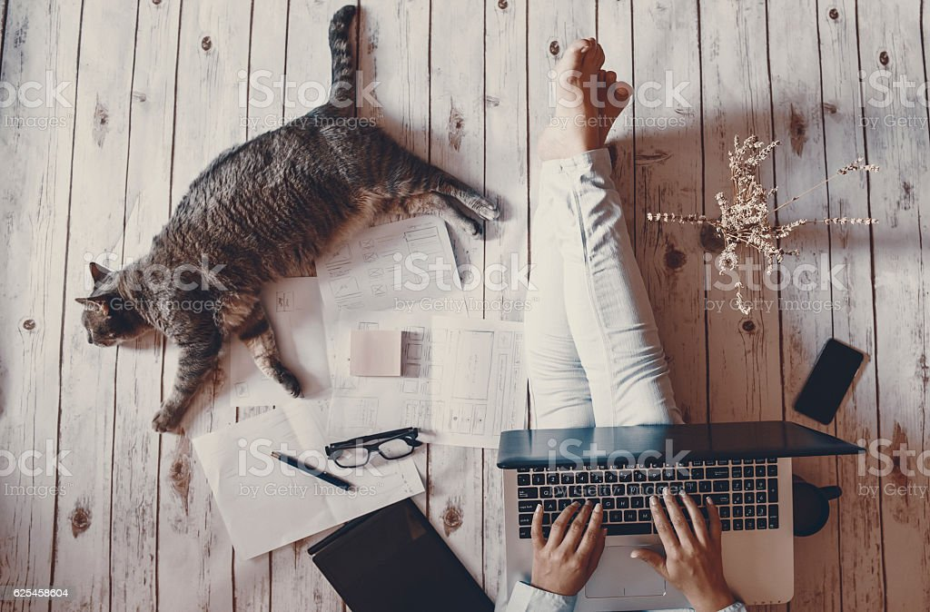 Creative workspace: girl working with her cute grey cat. stock photo