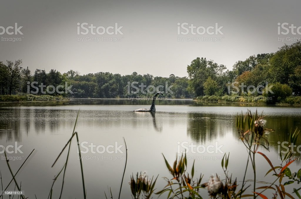 Creature in the Lake royalty-free stock photo