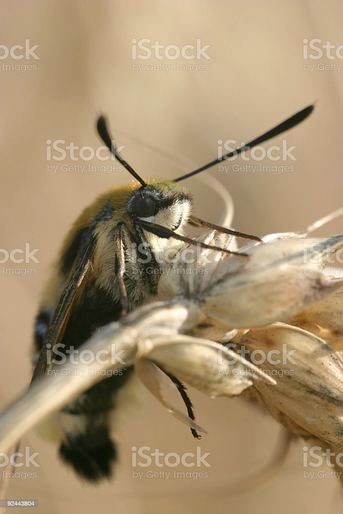 Creature on grain royalty-free stock photo