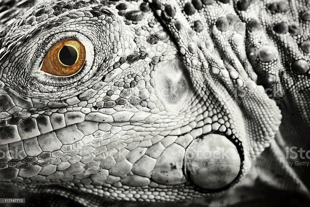 Creature royalty-free stock photo
