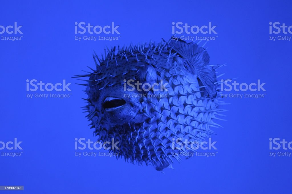 Creature Under Water stock photo