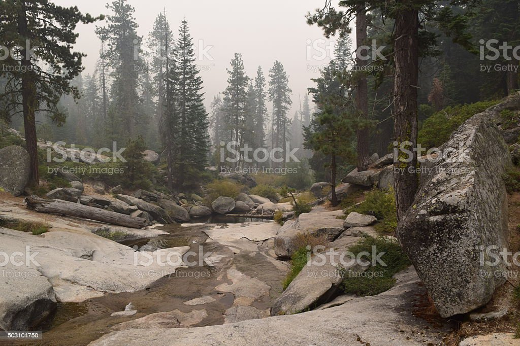 Creek along a trail at Lodgepole stock photo