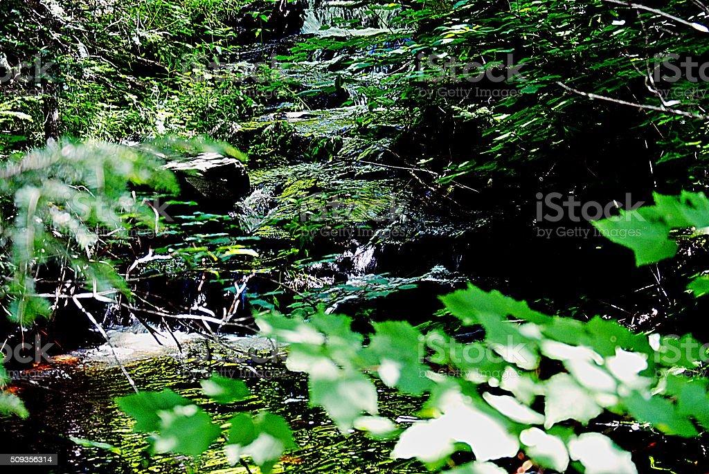 Creek Flowing royalty-free stock photo
