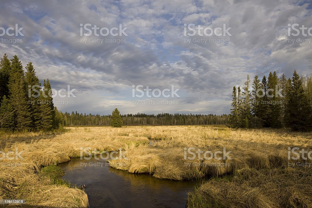 Creek in Boreal Forest royalty-free stock photo