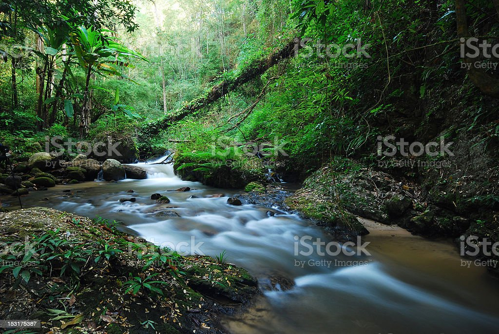 Creek in forest royalty-free stock photo