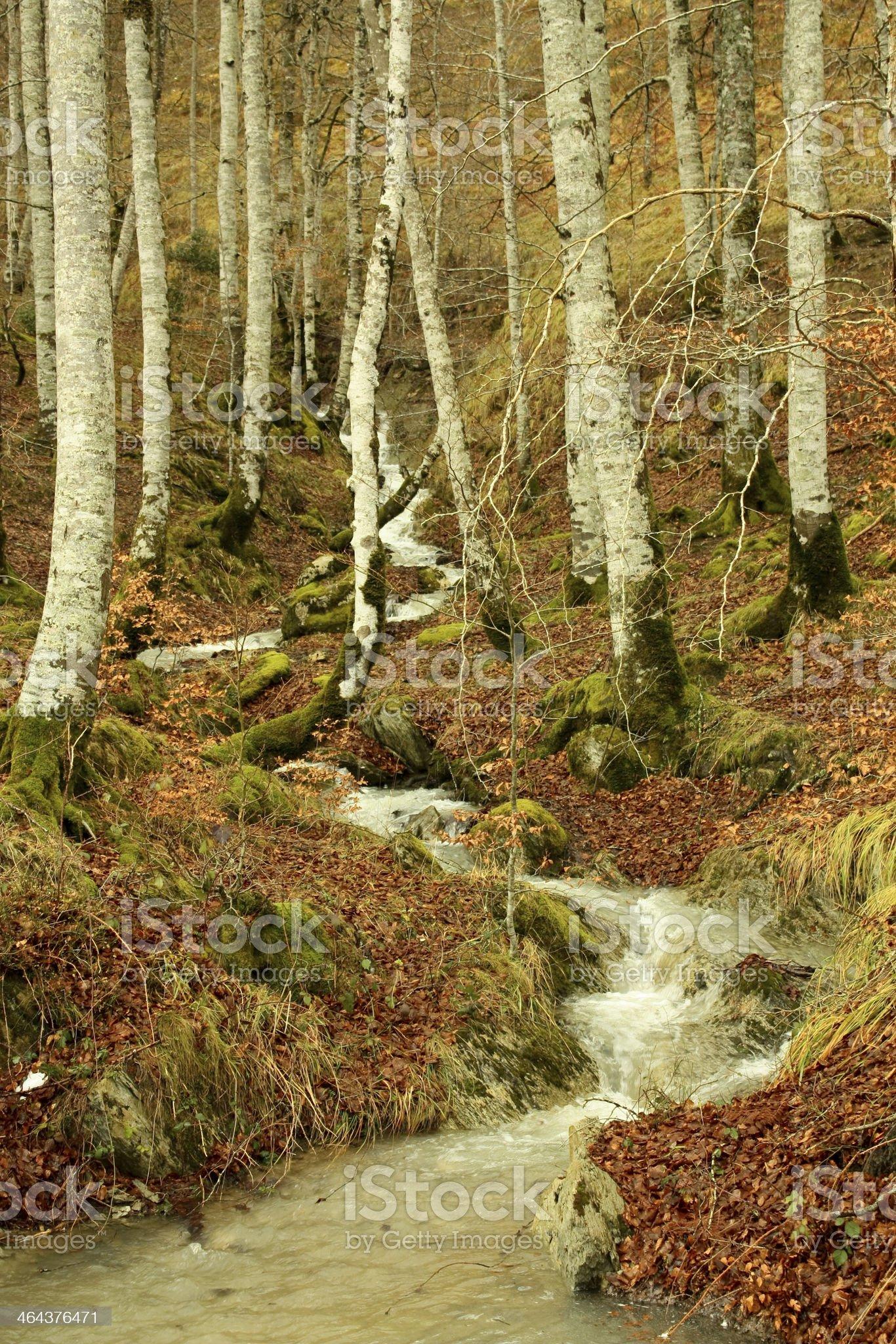 Creek in Jungle of Irati. Navarra, Spain royalty-free stock photo