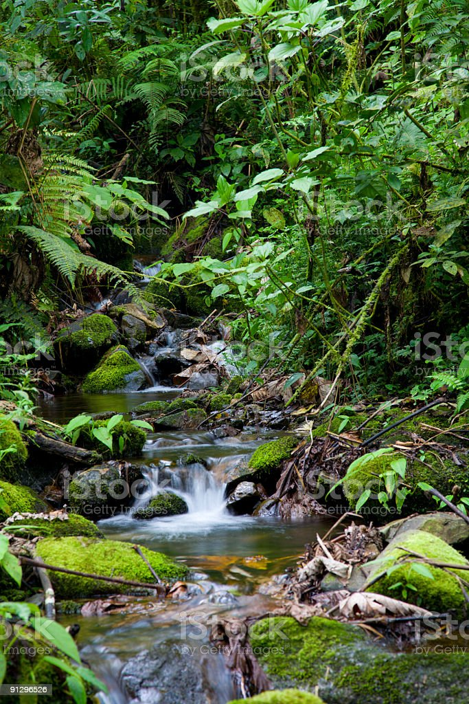 Creek in rainforest royalty-free stock photo
