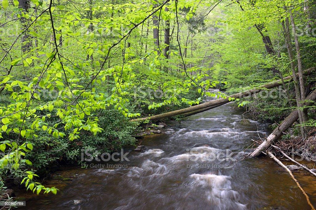 Creek in Spring stock photo
