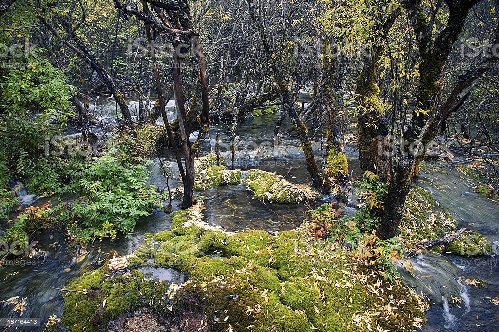 Creek in the forest royalty-free stock photo
