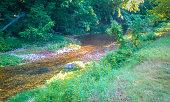 Creek Landscape Scene