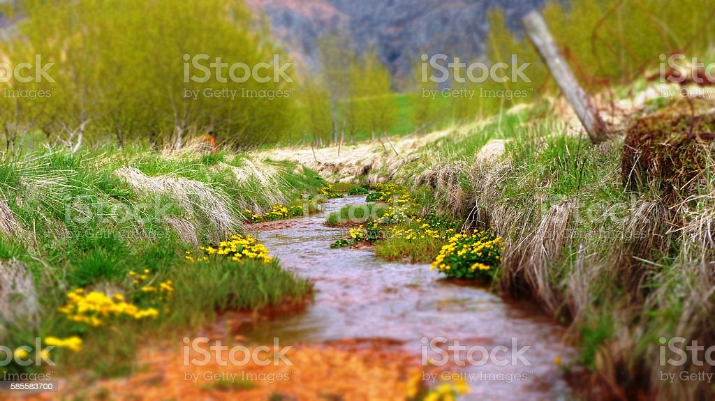 Creek surrounded by yellow blossoms stock photo