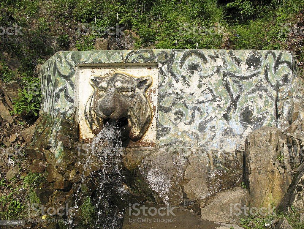 Creek 'Tiger Head' royalty-free stock photo