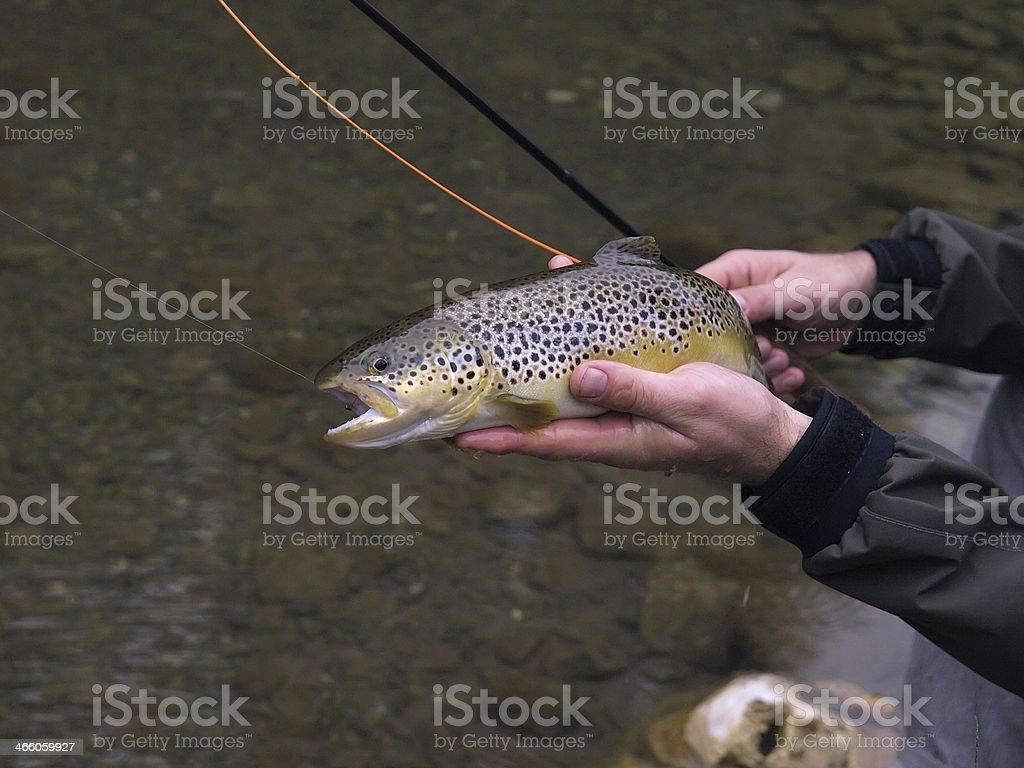 Creek Trout stock photo
