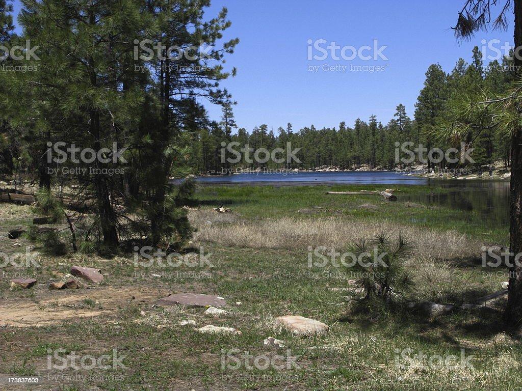 Creek Willow Springs Lake Arizona royalty-free stock photo