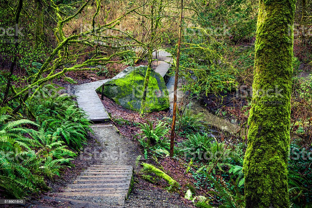 Creekside Trail Through Lush Greenery Of Forested Ravenna Park stock photo