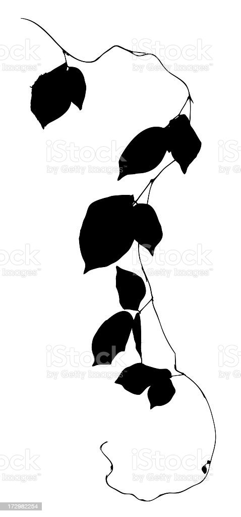 Creeper plant silhouette, isolated on white, clipping path included royalty-free stock photo