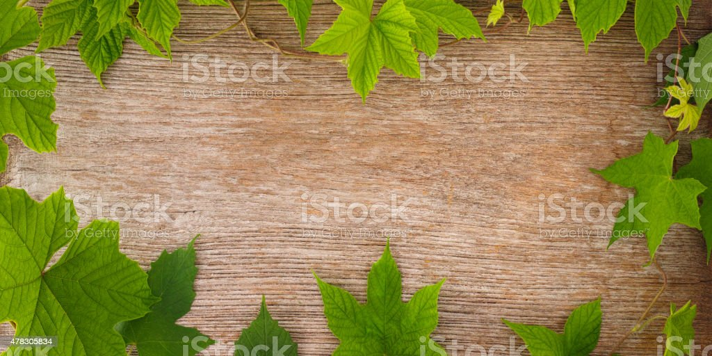 Creepers growing on an old wooden board. stock photo