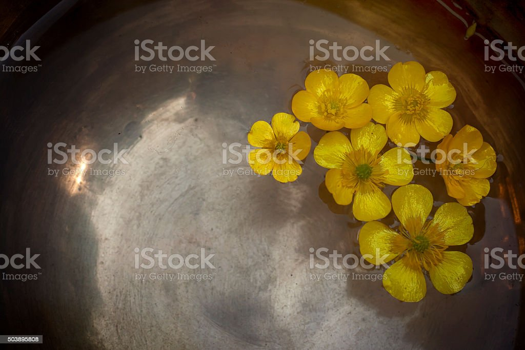 Creeping buttercup floating in a tibetan bowl stock photo