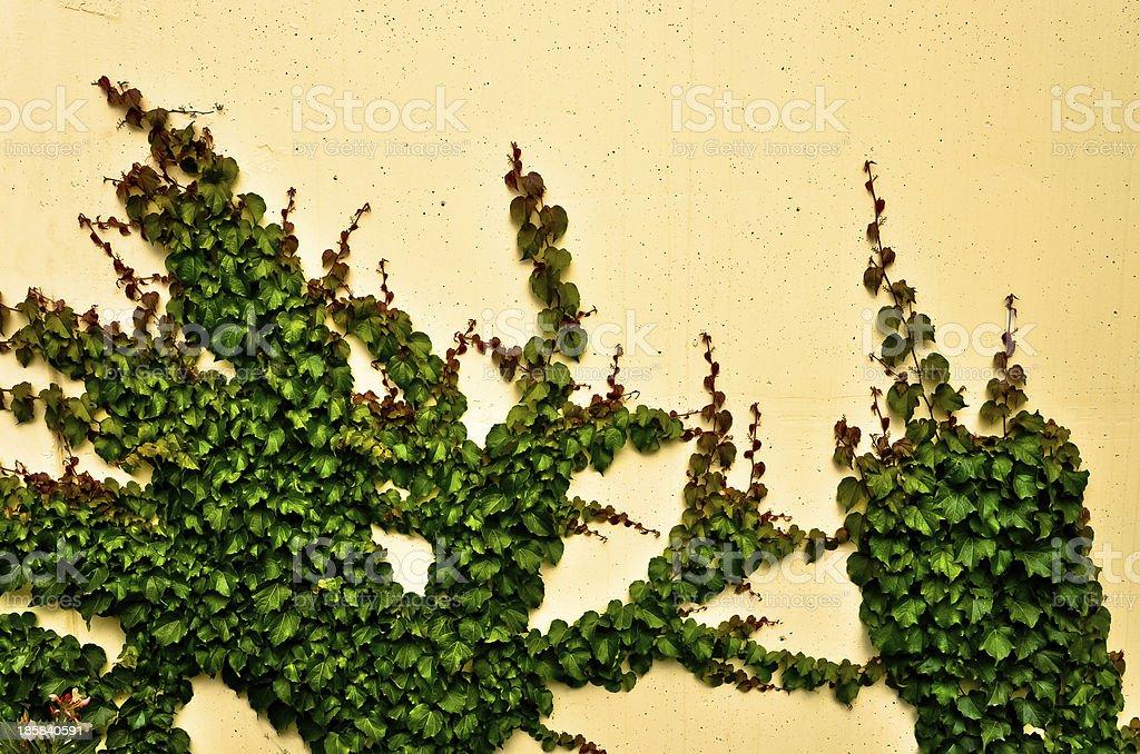 Schleichende ivy Hintergrund Lizenzfreies stock-foto