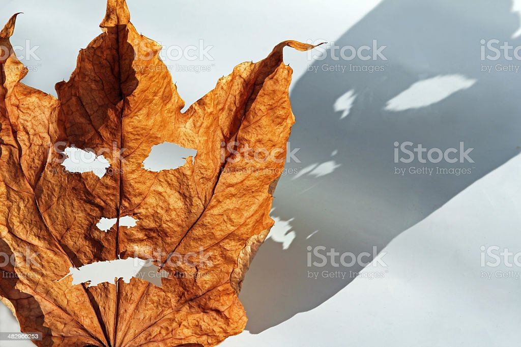 creepy autumn stock photo
