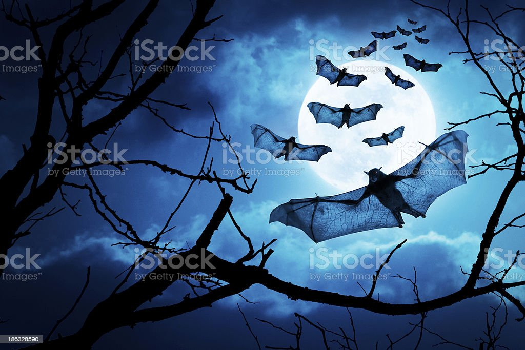 Creepy Bats Fly In By Full Moon For Halloween Night stock photo