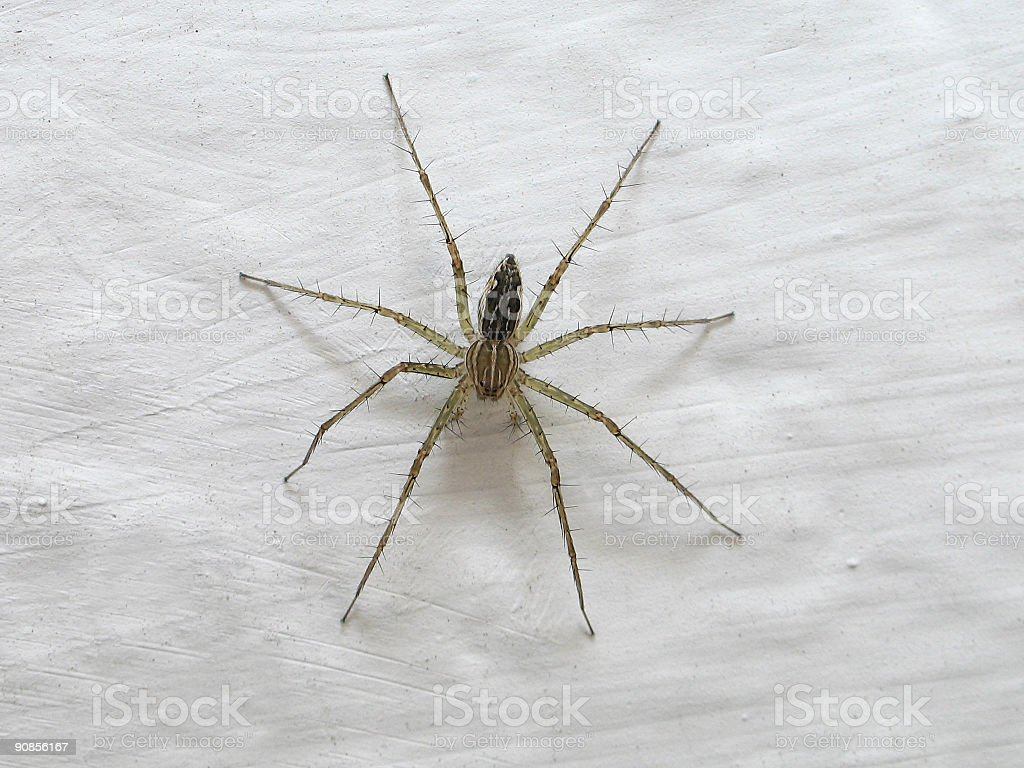 Creepy Crawler ( Macro ) royalty-free stock photo