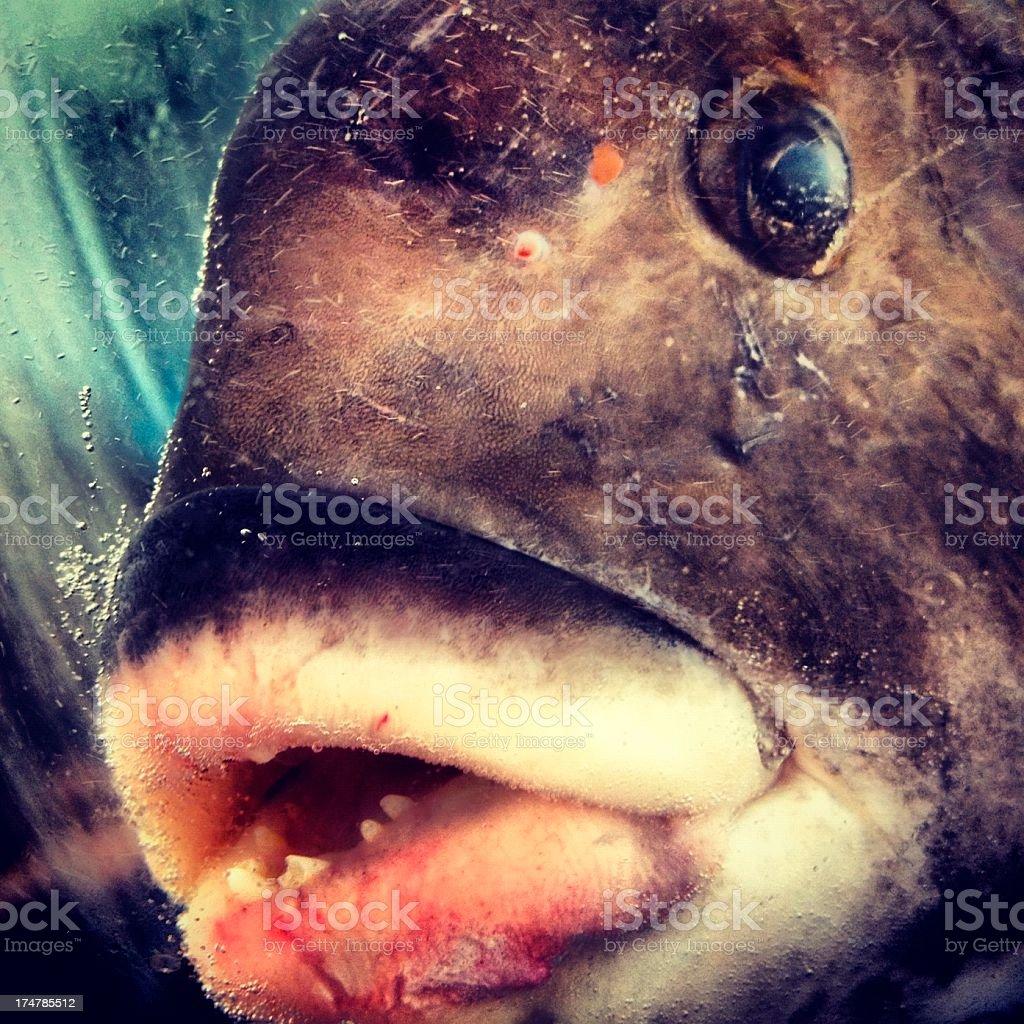 Creepy fish face stock photo