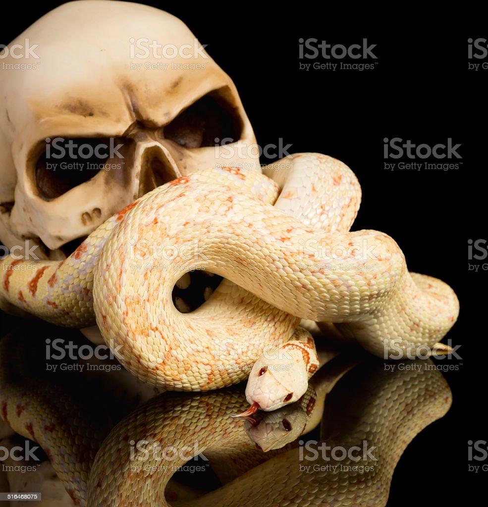 Creepy haloween snake stock photo