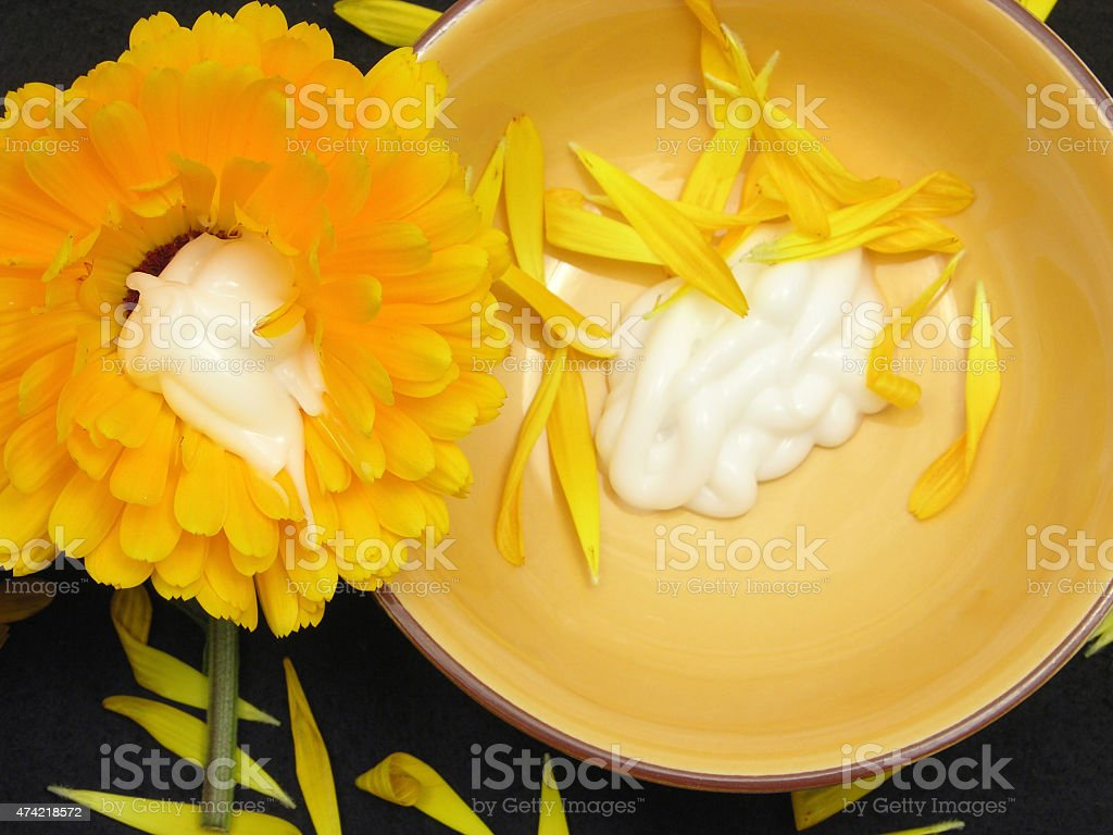 Creme of marigold on black background with petals and flower stock photo